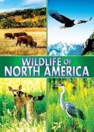 Wildlife of North America!
